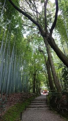 京都2日目7.jpg