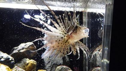 京都水族館2-2.jpg
