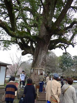 平野神社13.jpg
