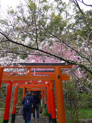 平野神社14.jpg