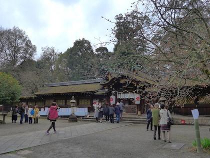 平野神社7.jpg