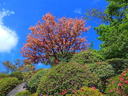 強羅公園1.jpg