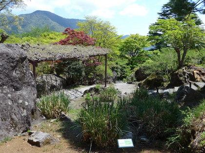 強羅公園12.jpg