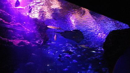 水族館10リコーM.jpg