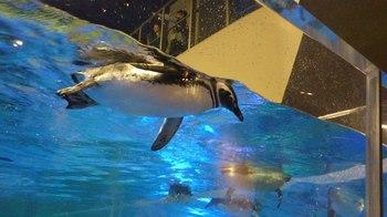 4年前ペンギン.jpg