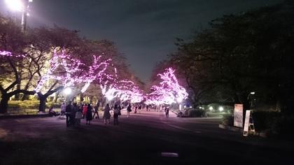 上野夜.jpg