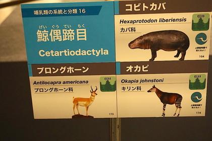 大哺乳類展13.jpg