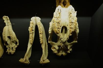 大哺乳類展21.jpg
