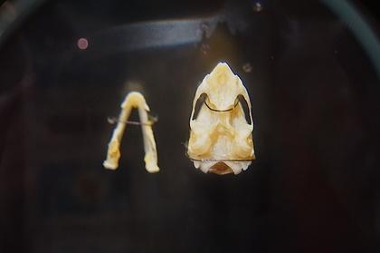 大哺乳類展23.jpg