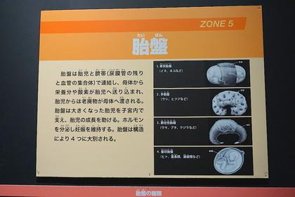 大哺乳類展33.jpg