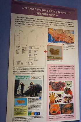 大哺乳類展38.jpg