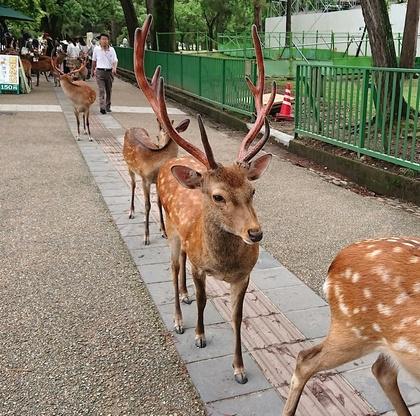 奈良7月.JPG