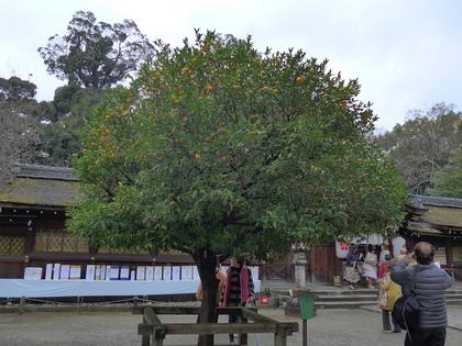 平野神社8.jpg