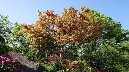 強羅公園.JPG
