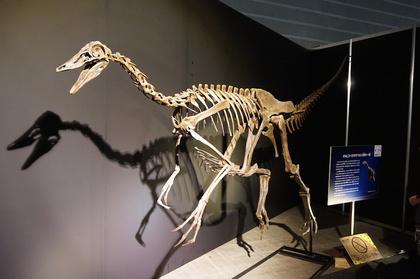恐竜3.jpg