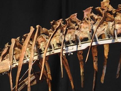 恐竜博12.jpg