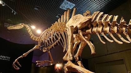 恐竜博13.jpg