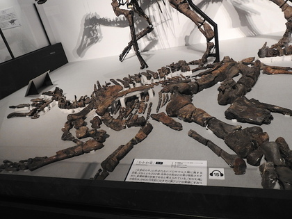 恐竜博17.jpg