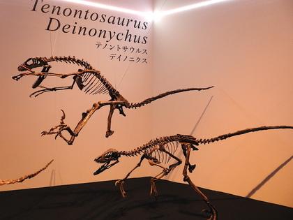 恐竜博4.jpg