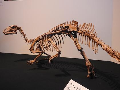 恐竜博5.jpg