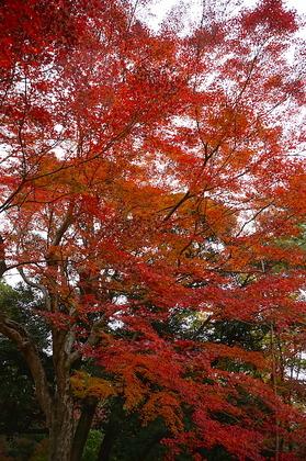 成田山12.jpg