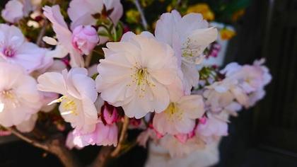 我が家の花.JPG