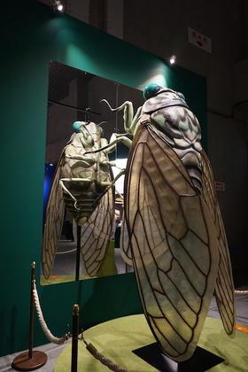 昆虫12.jpg