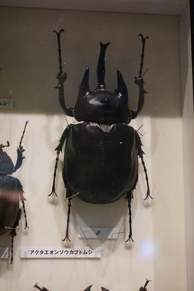 昆虫13.jpg