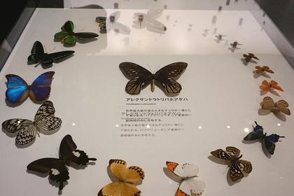 昆虫15.jpg