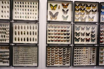 昆虫18.jpg
