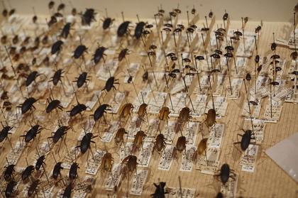 昆虫26.jpg