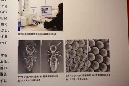 昆虫29.jpg