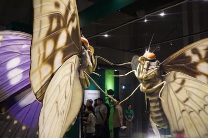 昆虫6.jpg
