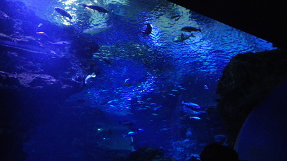 水族館10リコー.jpg