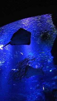 水族館12リコー.jpg