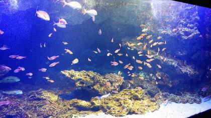 水族館16リコーM.jpg