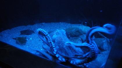 水族館17リコー.jpg