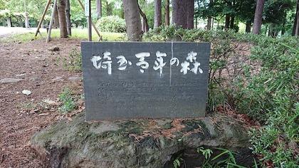氷川公園1.JPG