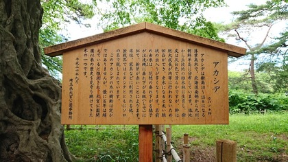 氷川公園8.JPG