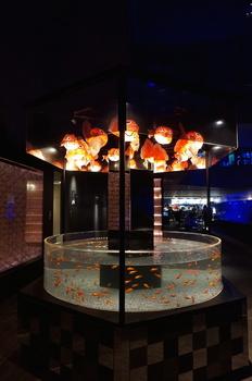 江戸金魚3.jpg