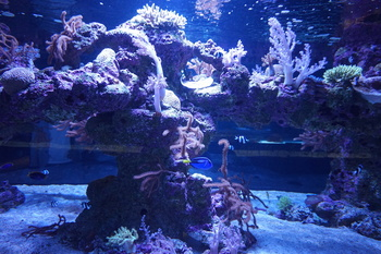 沖縄珊瑚礁.jpg