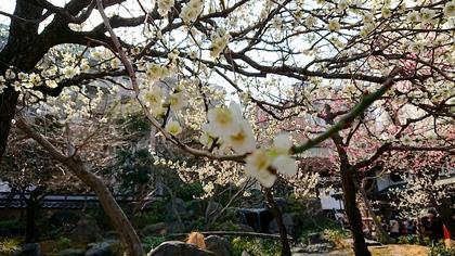 湯島梅祭1.jpg