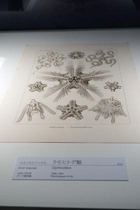 箱根ポーラ17クモヒトデ.jpg