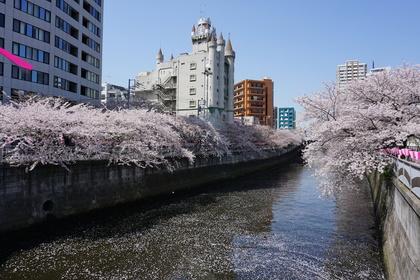 雅叙園-桜.jpg